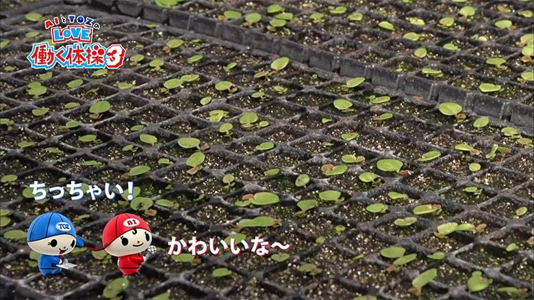 ono-gardening_3